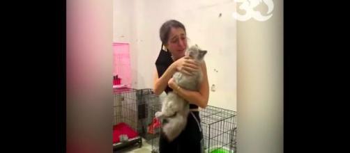 Plus de 100 animaux ont pu retrouver leur famille grâce aux associations, source : capture Youtube - 30millionsdamis