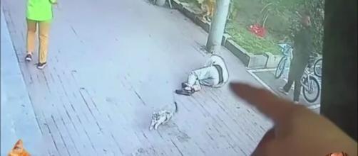 Les images de vidéo-surveillance ont permis de mettre toute la lumière sur l'accident subi par le vieil homme, source : capture Youtube