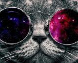 Gato con Gafas Fondo de Pantalla | Gato con lentes, Gato con gafas ... - pinterest.com