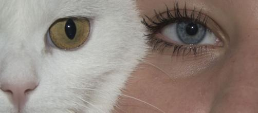 Les chats comprennent les humains. Credit: Pixabay/Shanon