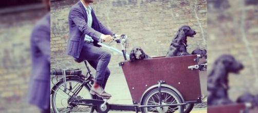 James Middleton le canta a sus perros cuando los pasea