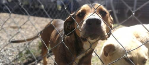 Los animales rescatados en espera de ser adoptados y amados