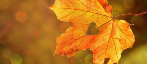 Oroscopo autunno: stagione di cambiamenti per Cancro, i Pesci si riscopriranno.