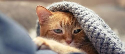 Pourquoi votre chat n'apprécie pas vos bisous ? - Photo Pixabay