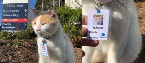 Elwood a obtenu son badge d'identification pour devenir agent de sécurité de cet hôpital australien, source : montage capture - Facebook
