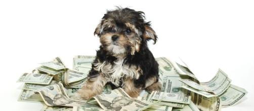 Cani, mantenerli può costare oltre 2mila euro l'anno.
