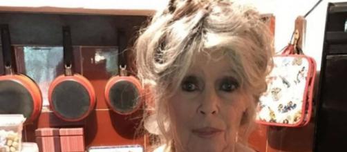Brigitte Bardot a poussé un coup de gueule. Source : Instagram @welovebrigittebardo