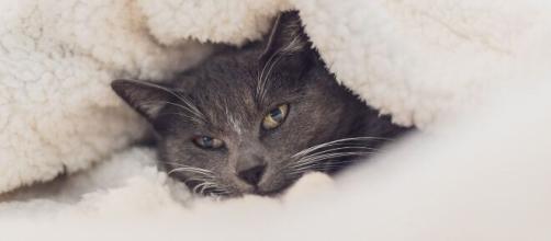 Chat : s'il dort avec vous ce n'est pas juste pour votre lit douillet - Photo Pixabay