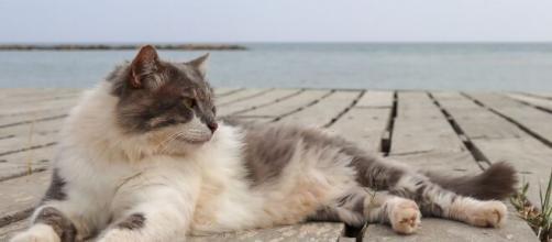 Pourquoi mon chat est distant à mon retour de vacances ? - Photo Pixabay