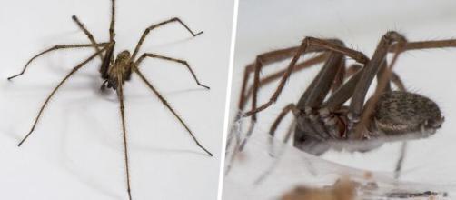 Des araignées géantes folles de sexe envahissent les maison - photo capture d'écran ipnoze facebook
