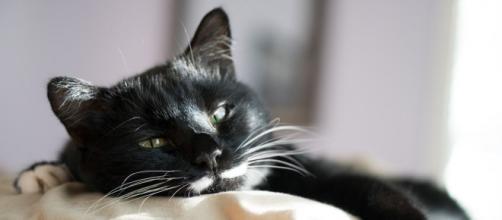 Dormir avec son chat serait plus apaisant que de dormir avec son conjoint - photo Pixabay