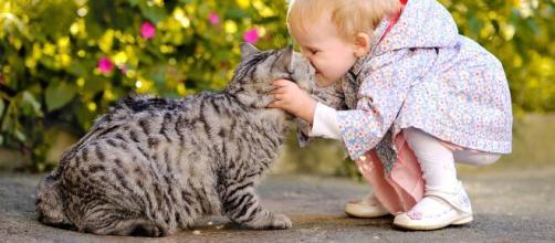Los gatos son ideales para prevenir enfermedades en los chicos. - 1zoom.me