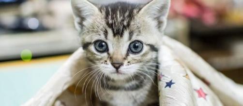 chat : sa personnalité serait influencée par celle de son humain - Photo pixabay