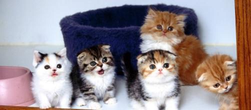 Gatos têm uma data especial para homenageá-los. O oito de agosto quase coincide com o Dia dos Pais. (Arquivo Blasting News)