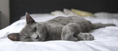 Pourquoi votre chat dort-il entre vos jambes ? - Photo Pixabay