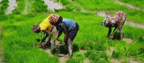 Exorbitância do preço do arroz deixa a clientela boquiaberta e gera reclamações. (Arquivo Blasting News)