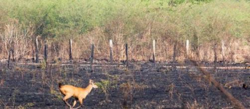 Animais lutam pela sobrevivência no Pantanal. (Reprodução/Governo de MS)