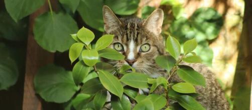 chat comment enlever les odeurs d'urine - Photo Pixabay