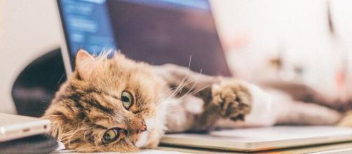 chat s'il gratte à côté de sa gamelle ce n'est pas par hasard - photo Pixabay