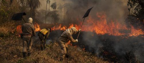 Fogo no Pantanal: voluntários lutam para salvar animais. (Arquivo Blasting News)