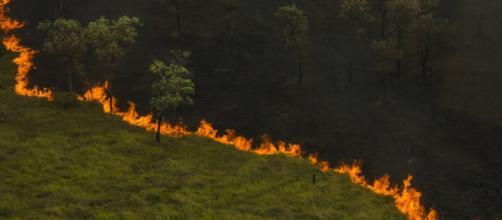 Foto aérea da tomada da vegetação pantaneira pelo fogo descontrolado. (Arquivo Blasting News)
