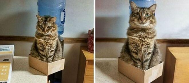 Avant / après : 7 photos qui montrent à quoi ressemble la vie avec un chat à la maison