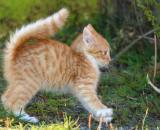 L'homme pourrait transmettre le Covid-19 au chat - Photo Pixabay