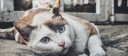 Pourquoi votre chat vous fixe-t-il du regard ? Photo Pixabay
