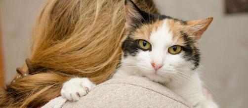 Comment faire pour rendre son chat plus affectif ? Photo Pixabay