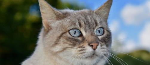 Qu'est-ce que la pancréatine chez le chat ? - Photo Pixabay