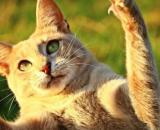 Pourquoi votre chat montre ses griffes - Photo Pixabay
