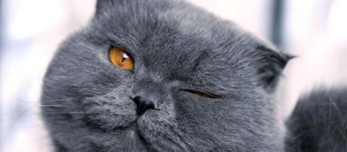 5 raças de gato consideradas raras e bonitas. (Arquivo Blasting News)