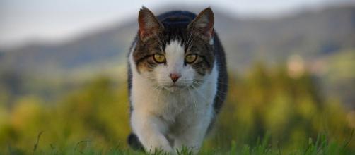 chat : ses quarts de folie montrerait qu'il souffre d'hyper activité - photo pixabay