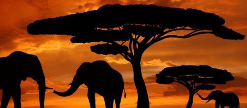 Lagos contaminados esconderiam a morte de centenas de elefantes na África meridional. (Arquivo Blasting News)