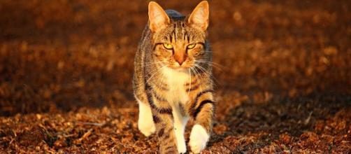 Quels sont les dangers qui guettent votre chat l'automne - photo pixabay