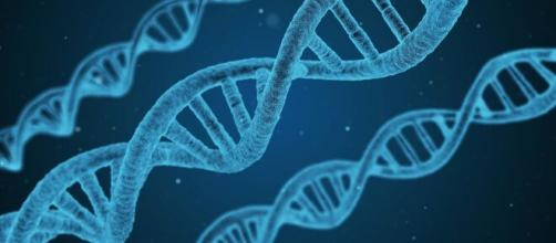 El Centro Nacional de Biotecnología está desarrollando la vacuna española