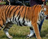 Le gouvernement met en place différentes actions pour aider les animaux de cirques - Photo Pixabay