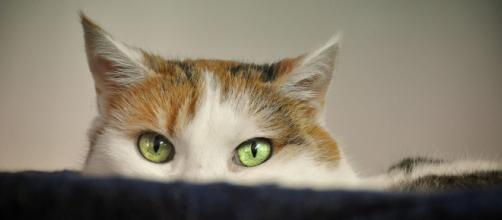 Pourquoi mon chat est attiré par les inconnus ? - Photo Pixabay