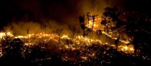 Bolsonaro critica ONGs ao falar sobre queimadas na Amazônia. (Arquivo Blasting News)