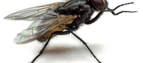 Francia, un anziano ha fatto saltare in aria la cucina e una parte del tetto per scacciare una mosca.