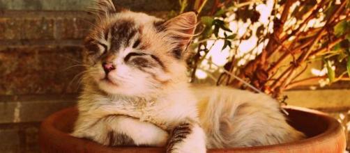 Pourquoi mon chat roucoule ? - Photo Pixabay