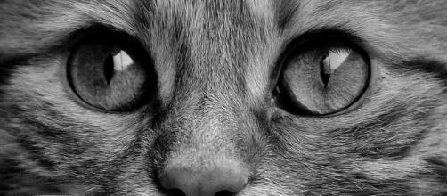 Tout comme l'homme le chat peut aussi exprimer des émotions - Photo Pixabay