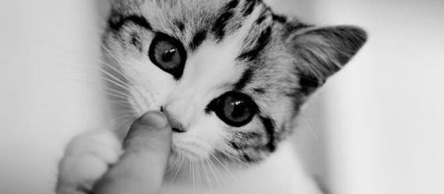 chat quelles sont les raisons qui expliquent qu'il vous lèche ? - Photo pixabay