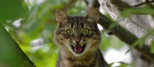 Le pelage de votre chat infuencerait sa personnalité - Photo Pixabay