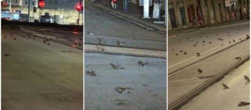Roma, strage di uccelli la notte di Capodanno.