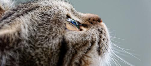 Un chat a failli perdre la vie - ©Pixabay