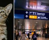 Un chat reste bloqué dans un aéroport pendant des jours - Photo montage Pexel