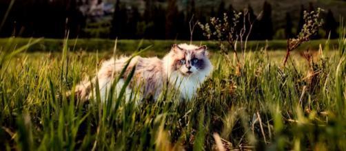 Un chat déclaré décédé revient un an après sa disparition - Photo Pexel