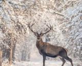 Oroscopo settimanale dal 18 al 24 gennaio: Toro e Gemelli in netto miglioramento