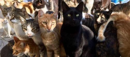 La situation pour les chats devient dramatique à Chypre - ©capture d'écran Facebook Tala cats